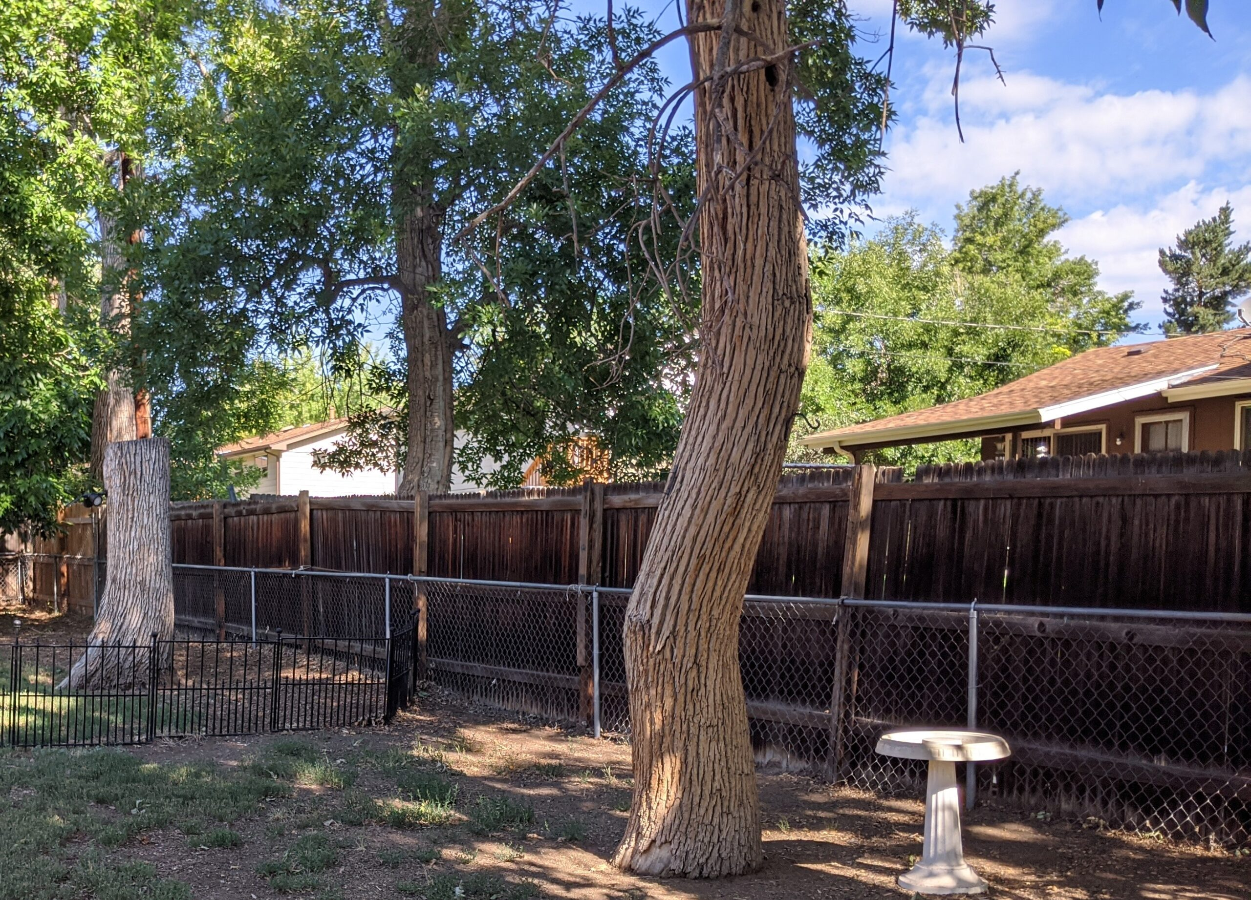 We wanted to get rid of this 10' tree stump and 40' tall dead tree, but they weren't a top priority on our list of projects.