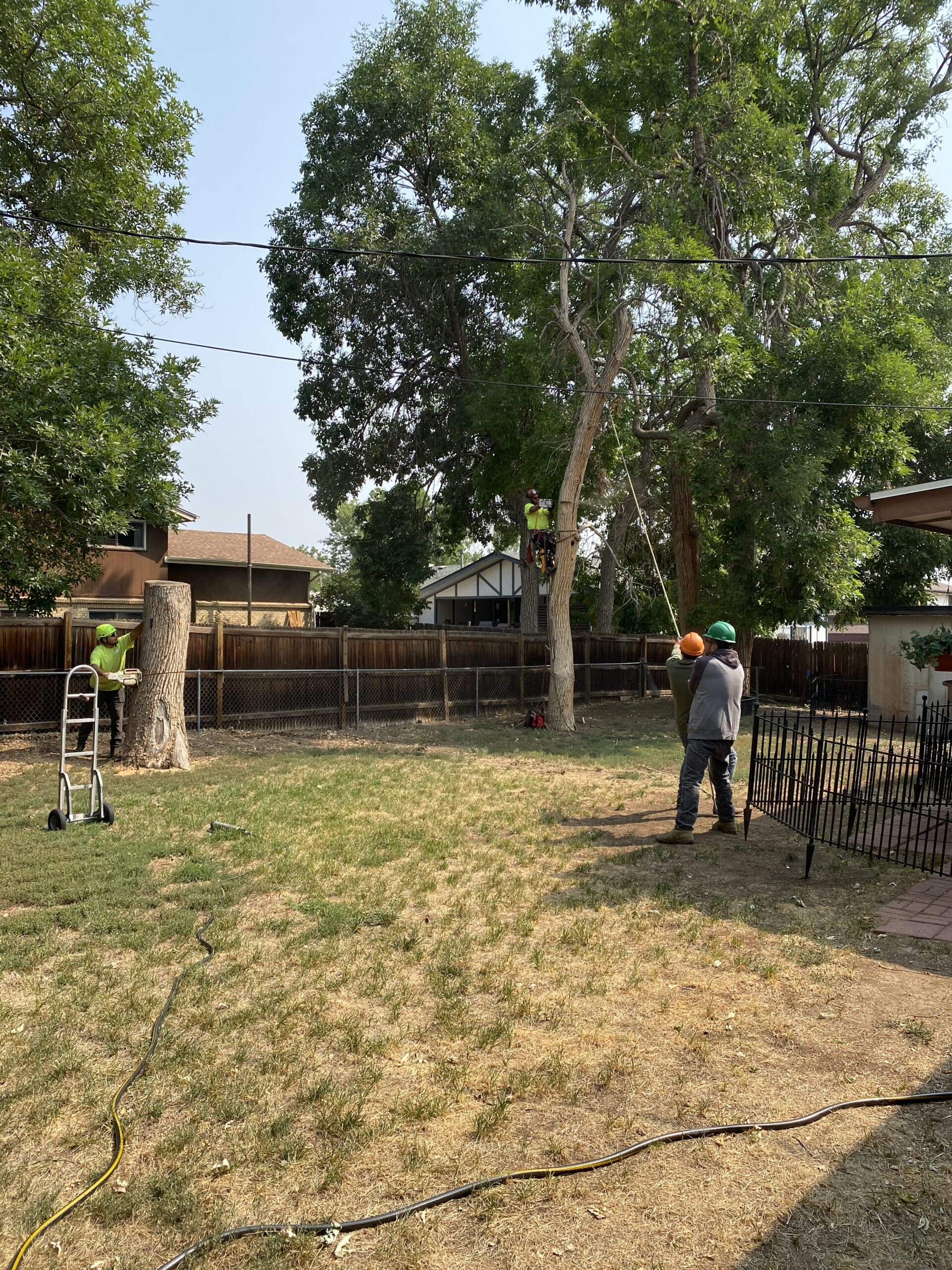 We hired Armando and his crew to safely remove these two dead trees from our backyard. See the overhead power lines that they also had to avoid?