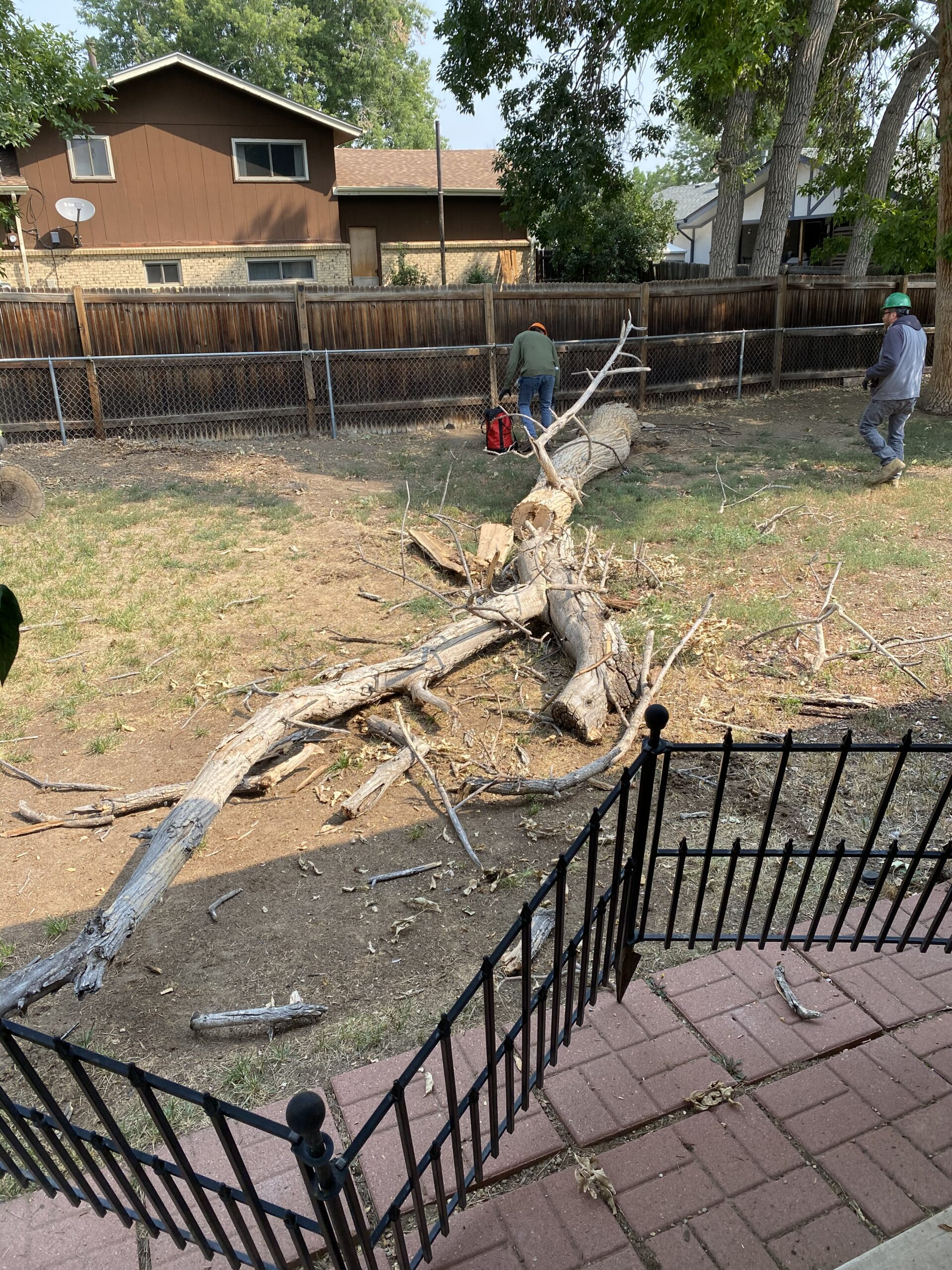 Termites had eaten the entire base of this rotten, dead tree. It was tall enough that it could have hit the back of our house or our neighbor's fence if it fell down because of winds and snow.